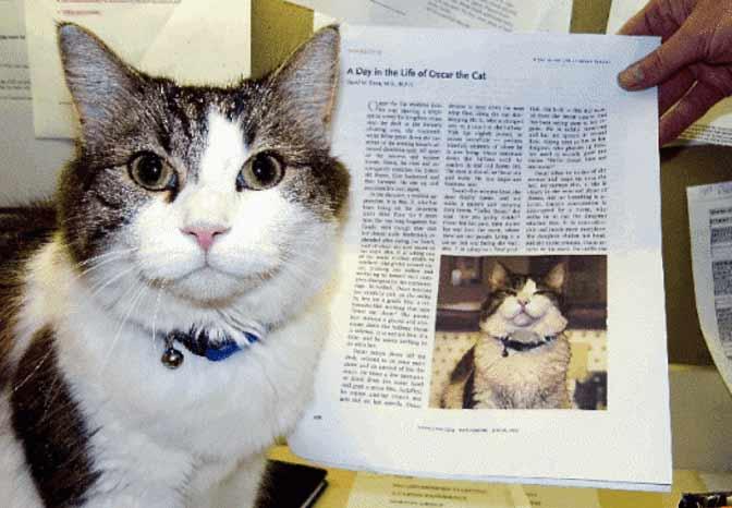 Кот по кличке Оскар может чувствовать приближающуюся смерть человека лучше врачей фото