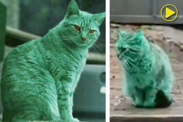 Загадочную кошку зеленого цвета заметили на улице в Болгарии фото