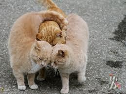 Кошки помогают ученым в создании вакцины против СПИДа фото