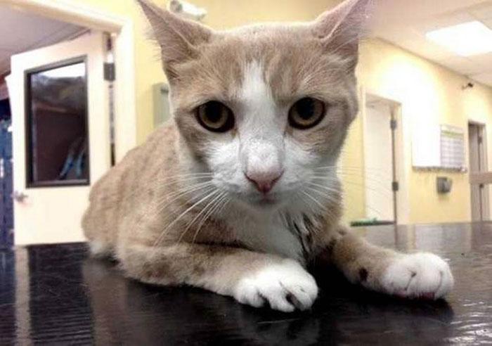 Впервые собака стала донором крови для кота фото
