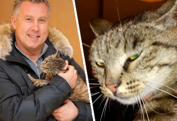 Кот-обжора, объевший рыбный магазин в аэропорту Владивостока, оказался кошкой фото