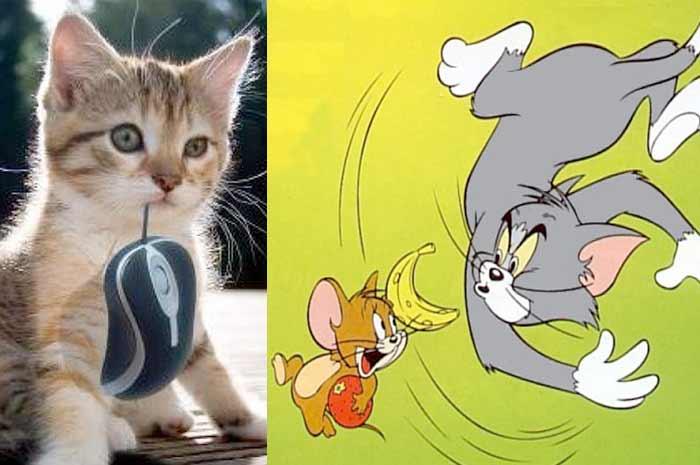 У кошек обнаружен новый синдром «Тома и Джерри» фото