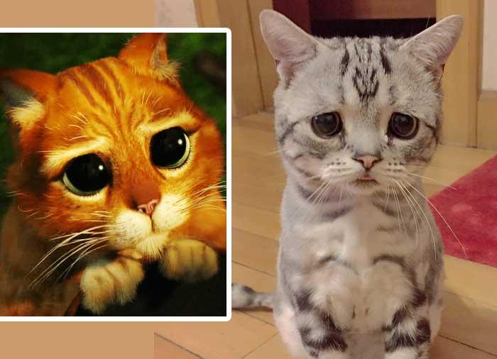 Грустная кошка по кличке Луху фото