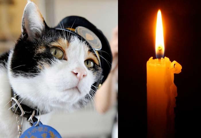 В Японии похоронили кошку Таму, служившую начальником вокзала фото