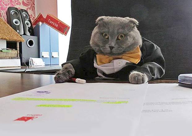 Кота по кличке Босс назначили пиар-менеджером румынского интернет-магазина фото