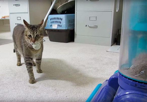 Кормушка, которая заставит кота поохотиться фото