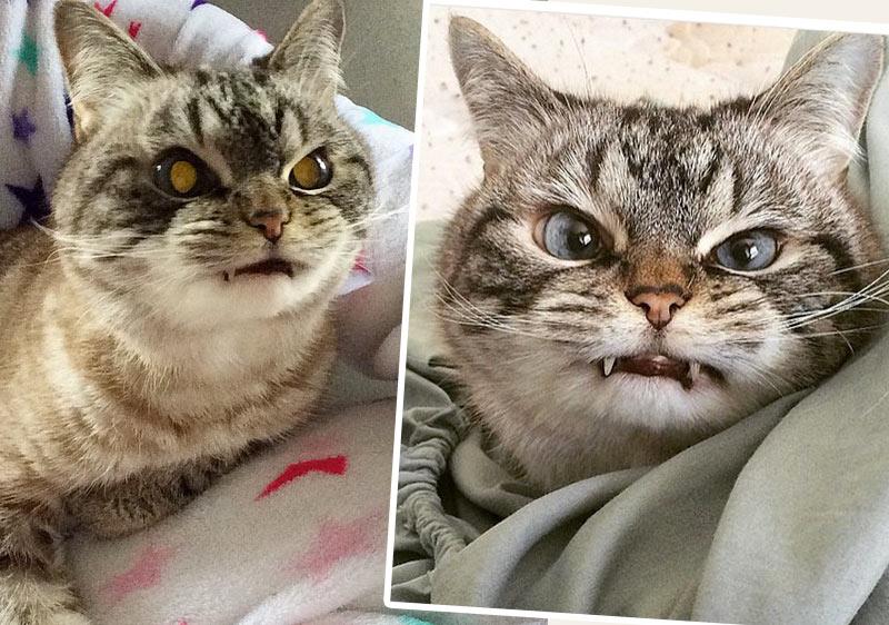 Кошка-вампир стала звездой Instagram фото