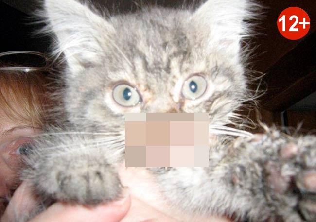 Изуродованный уральский котенок Мышкин нашел хозяев фото