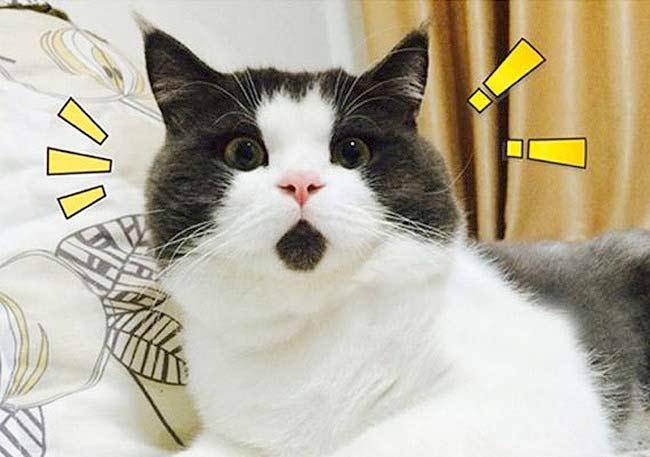 Удивлённый кот Банья фото