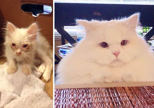 Котенок, найденный на дороге, оказался невероятно пушистым фото
