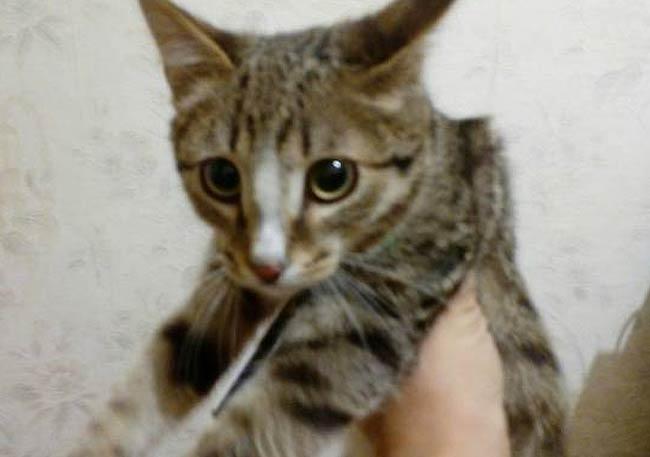В Башкирии кот попал под капот и ... нашел себе нового хозяина фото