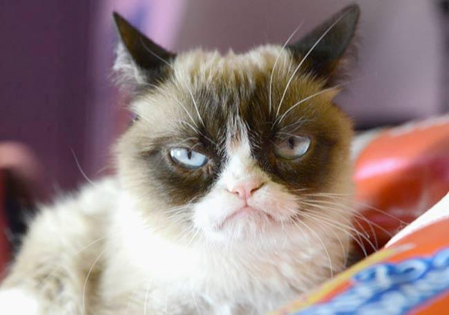 Сердитый кот подал иск на производителя кофе фото