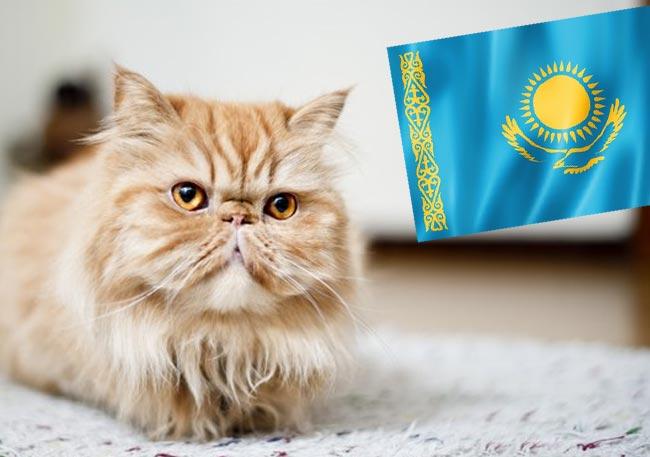 «Не брошу Барсика»: Курьезный случай на границе с Казахстаном фото