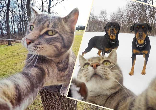 Мэнни кот, который обожает делать селфи фото