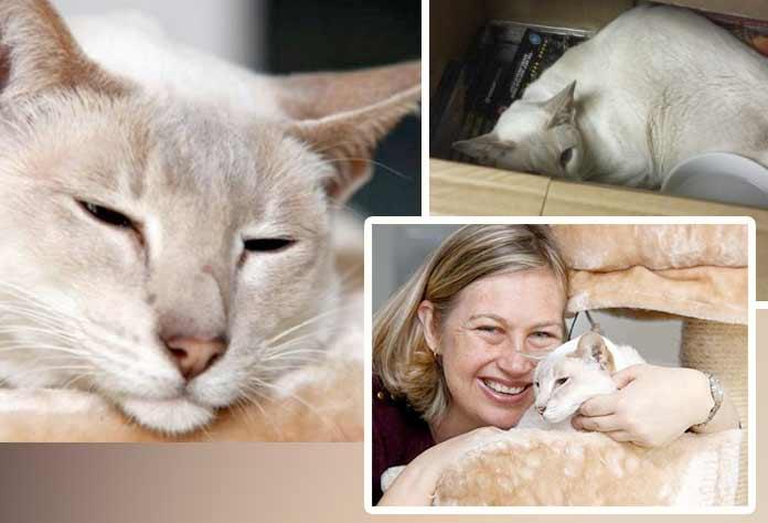 В Британии кошку по ошибке отправили посылкой фото