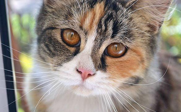 Юрий Куклачев: Московские кошки перестали орать весной от тяжёлой жизни фото