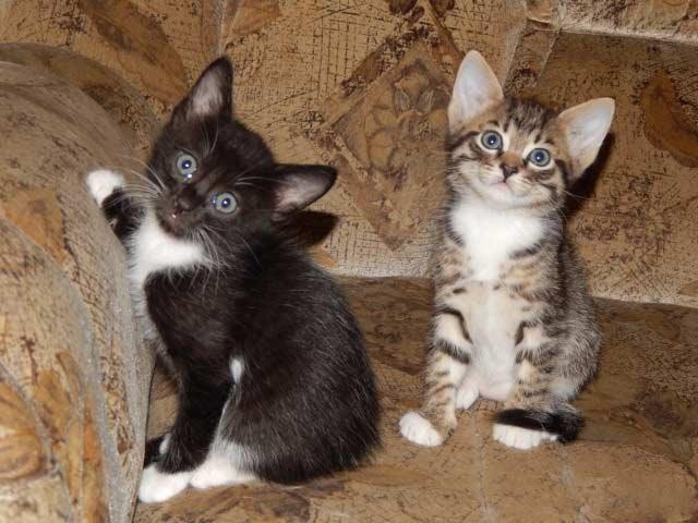 В Ленинградской области кошки спасли семью от отравления газом фото