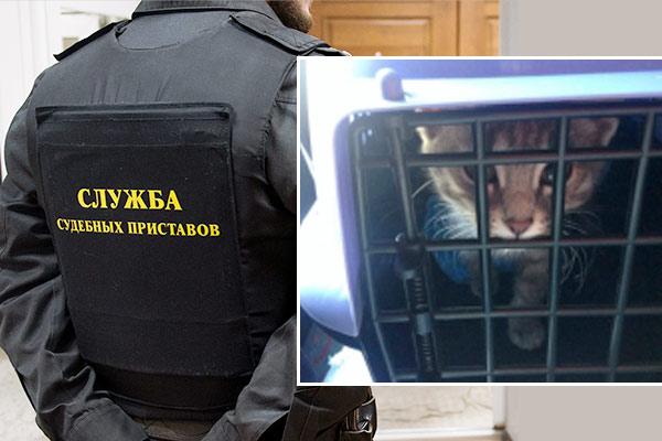 В Перми арестовали кота за долги хозяина фото