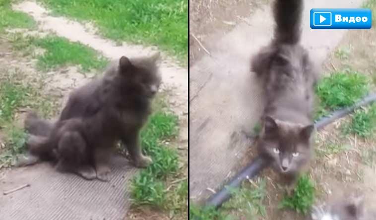 В Ахтубинске нашли кошку с тремя хвостами фото
