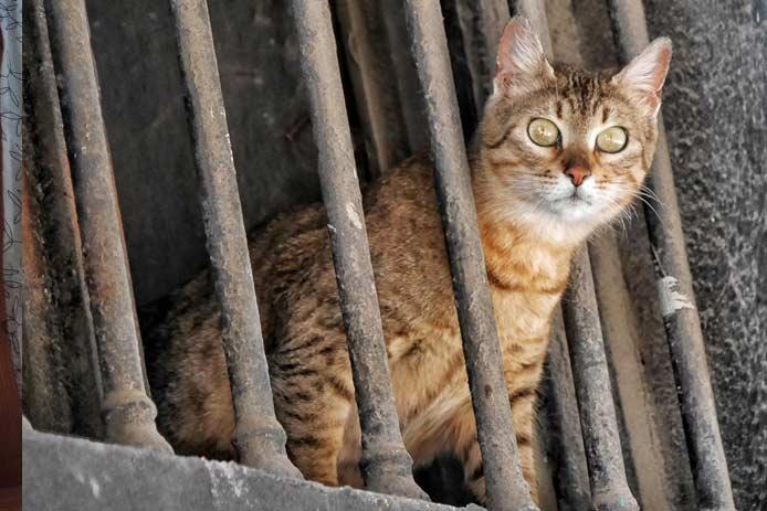 Испанцу грозит штраф на крупную сумму из-за кошек фото