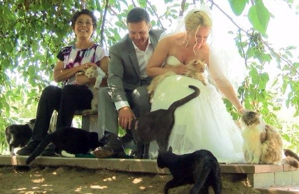 Канадская пара пригласила на свадьбу тысячу кошек фото
