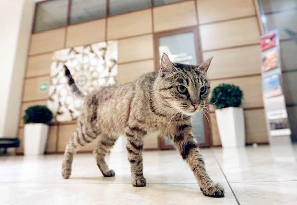 Во Владивостоке умерла знаменитая кошка Матроска фото