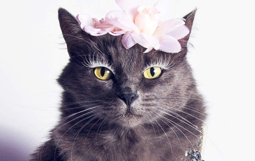 Хозяйка гламурной кошки рассказала откуда появилась идея фото