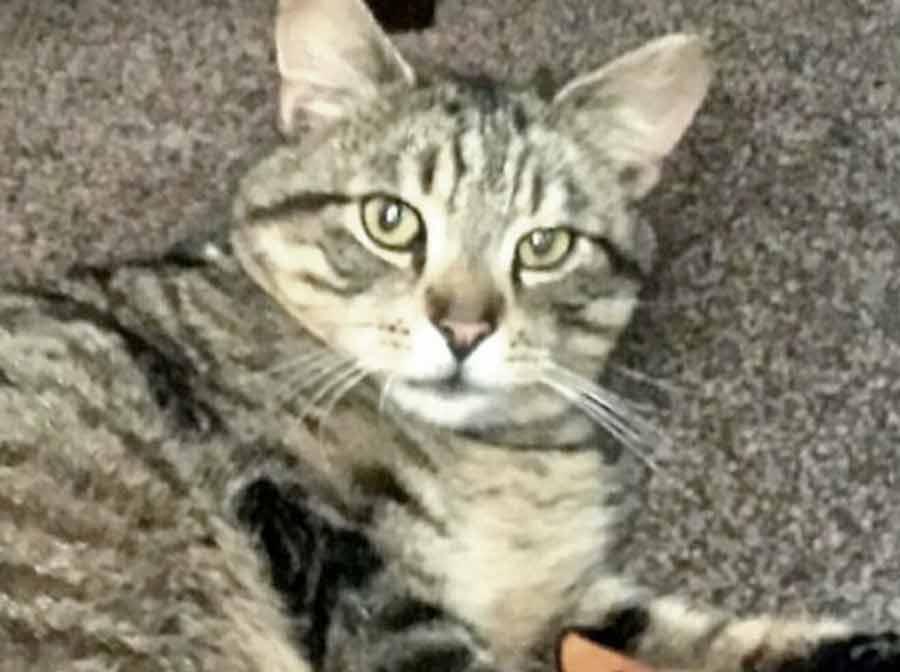 Кот вернулся к хозяевам через три года после пропажи и за это время изрядно потолстел фото