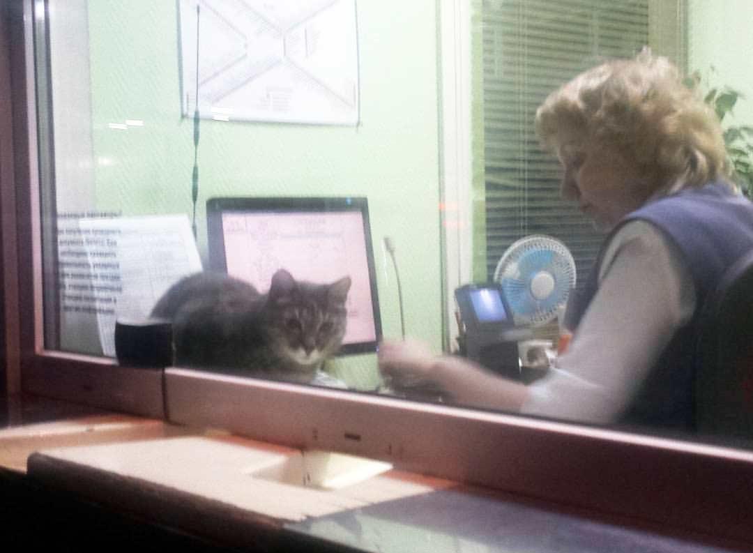 На железнодорожной станции в Новосибирске живет кот-кассир фото