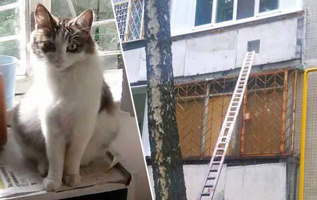 Жительница Москвы специально для кошки построила лестницу на второй этаж фото