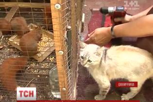 Кошка спасла шестерых бельчат и вскормила их своим молоком фото