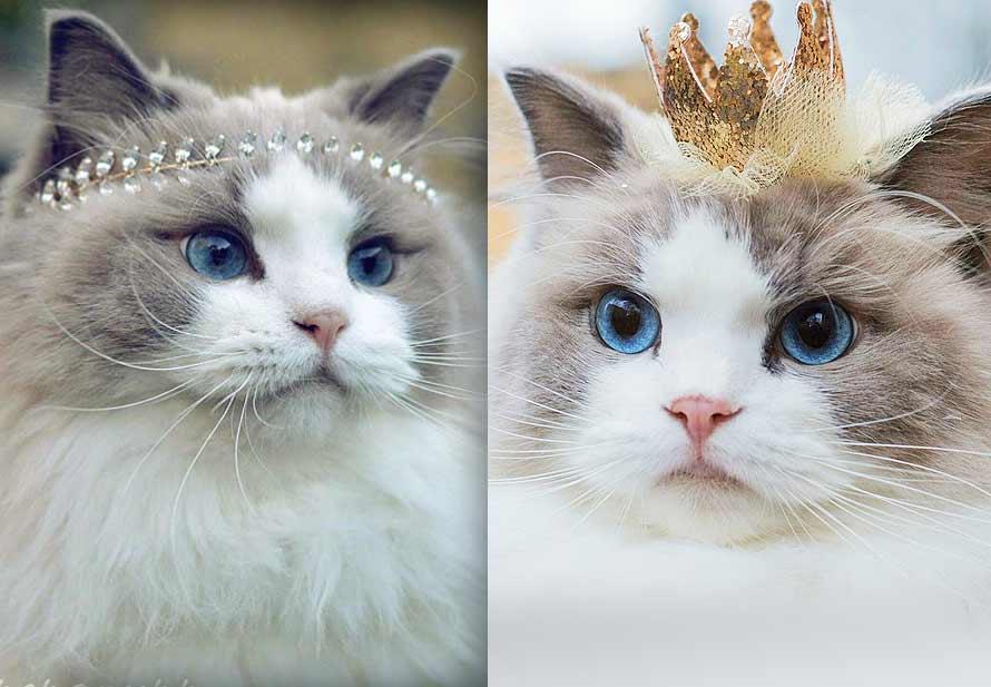 Новая звезда интернета — Принцесса Аврора фото