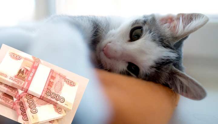 Пермский кот получил оклад в 400 тысяч и личного водителя фото