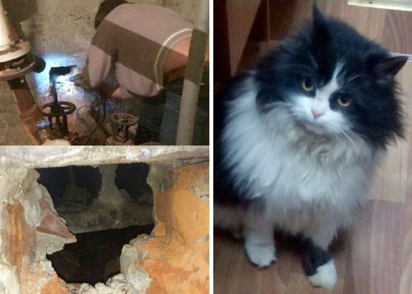 В Тамбове спасли кошек из засыпанного землей коллектора фото