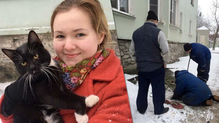 В Кировске спасли кота попавшего в ловушку под асфальтом фото