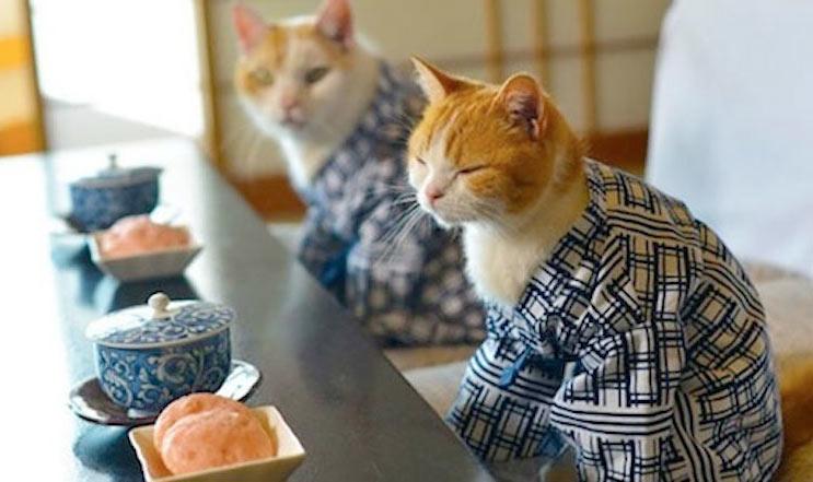 Японские исследователи выяснили, насколько умны кошки фото