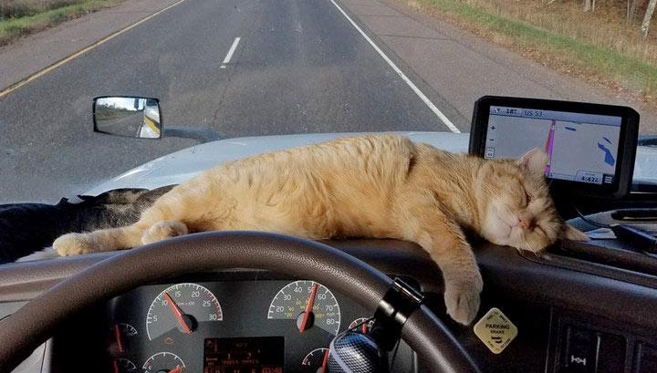 Кот проехал более 600 км цепляясь за дно грузовика фото