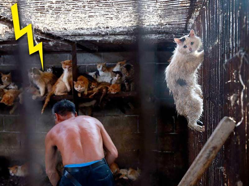 На Тайване запретили убивать кошек ради мяса фото