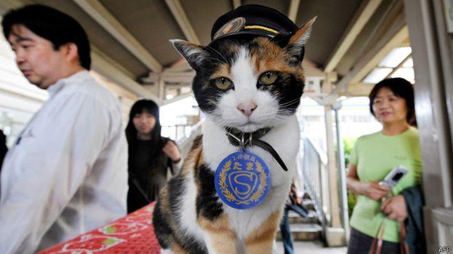 18 лет назад родилась Тама – первая в мире кошка-станционный смотритель фото