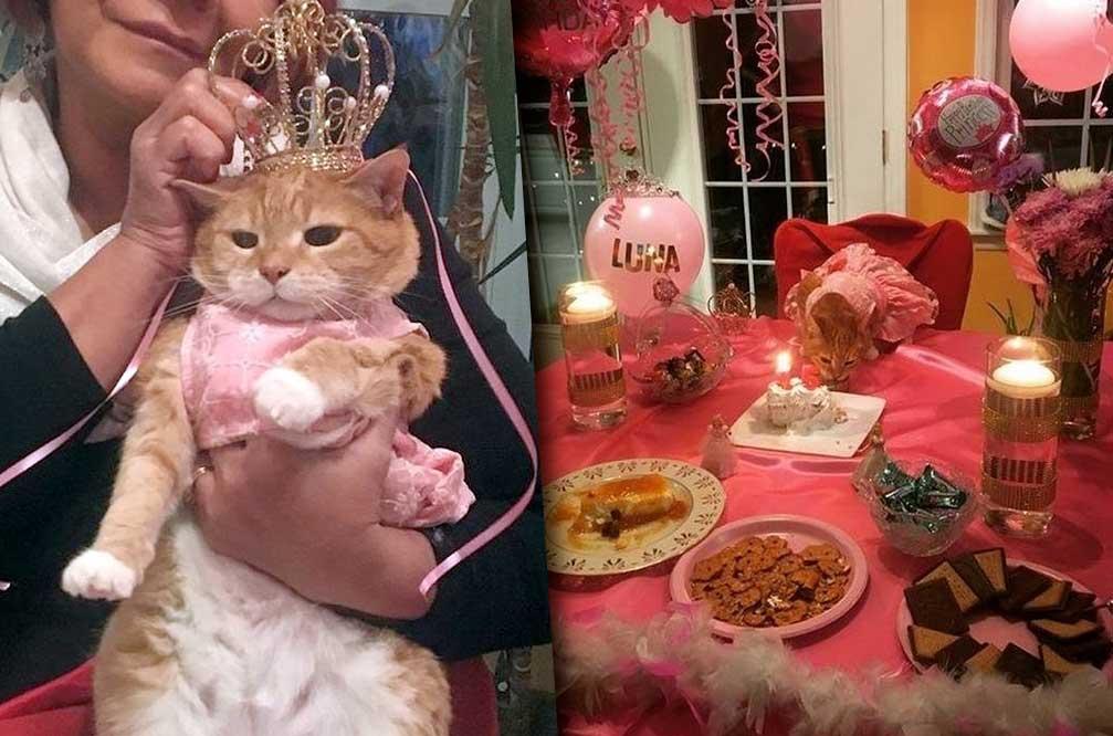 Семья из Северной Каролины устроила своей кошке настоящий праздник в честь её 15-летия фото
