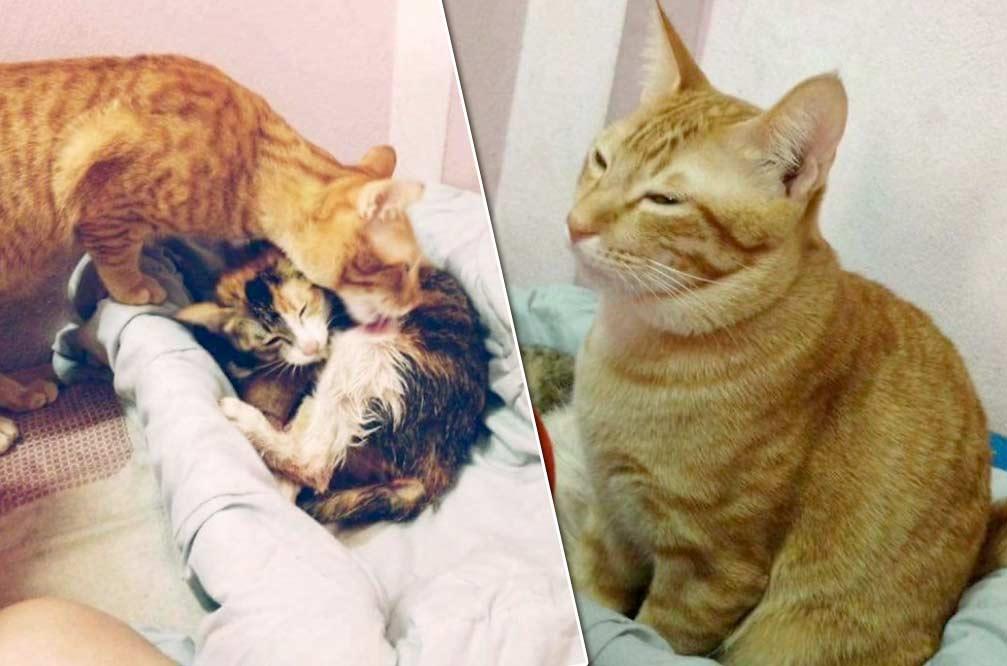 Кот поддержал кошку во время родов фото