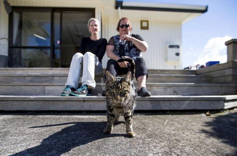 В Новой Зеландии разоблачили кота, который жил на две семьи фото