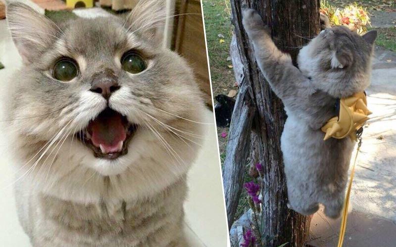 Бон-Бон самый популярный кот Таиланда фото