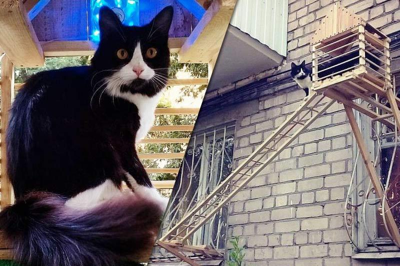 Житель Волгограда специально для своей кошки построил отдельный вход в квартиру фото