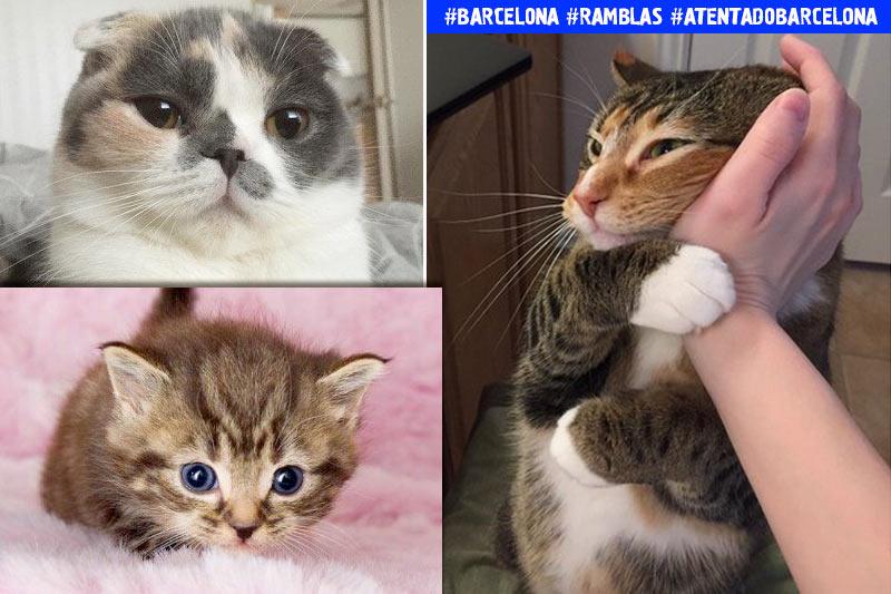 Кошки помогают бороться с терроризмом: в Твиттере устроили флешмоб после трагедии в Барселоне фото