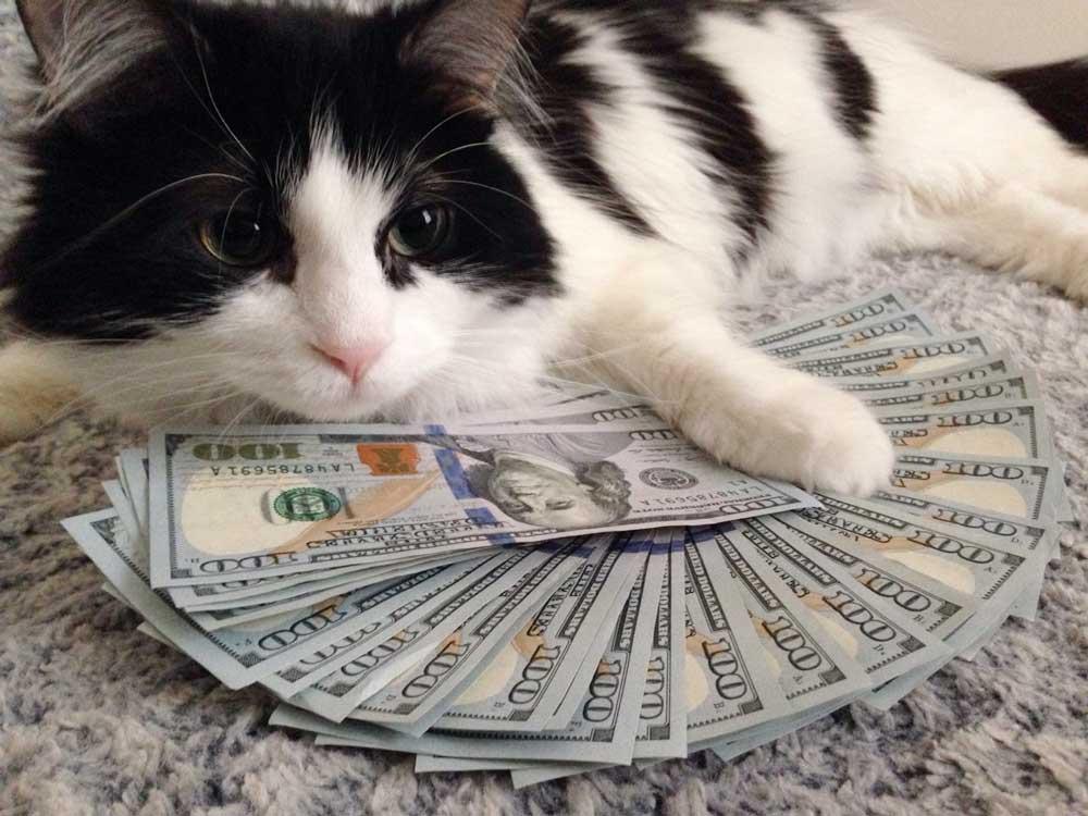 Миллионерша из Нью-Йорка оставила кошкам 300 тысяч долларов фото