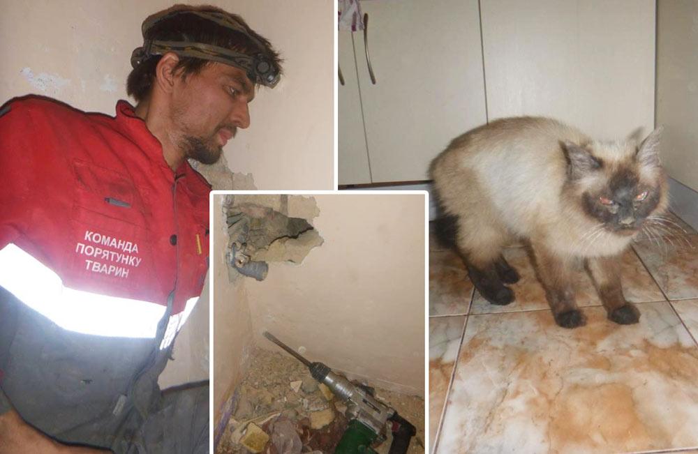 «Ну кто так обращается с котом?!» Чтобы достать кота из лабиринта, спасатель придумал неожиданный способ фото