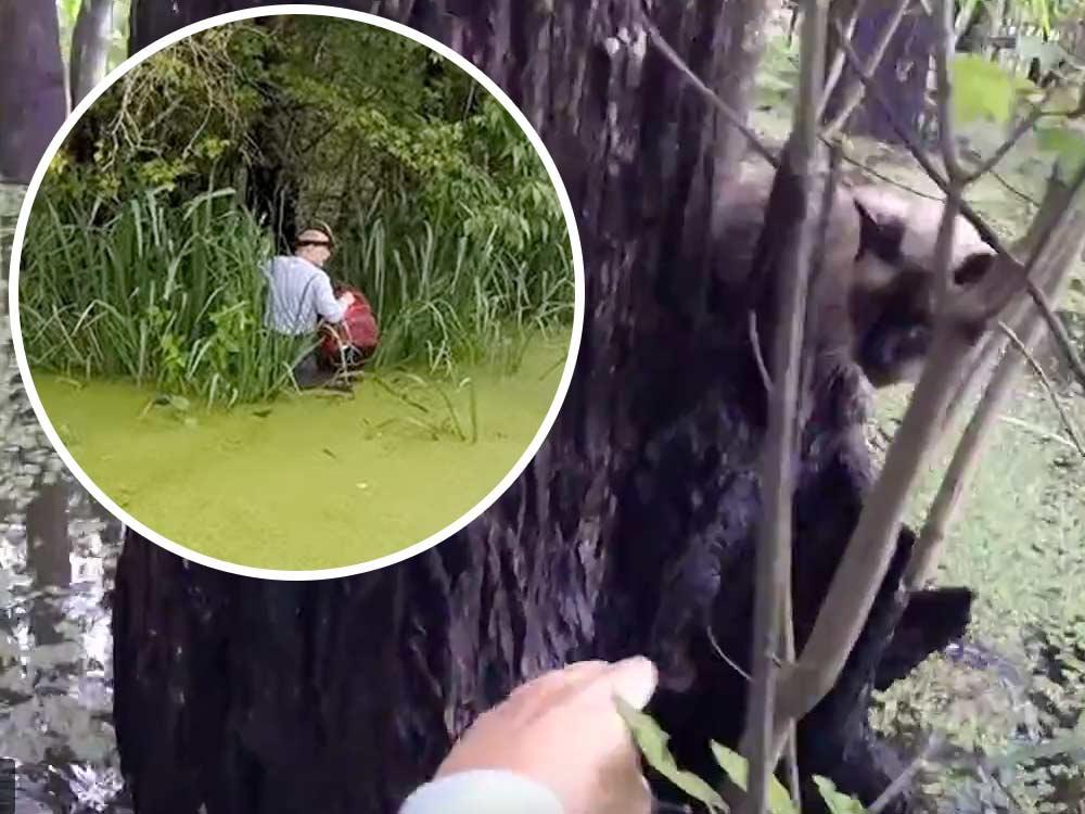 В Луизиане мужчина не побоялся спасти кота из болота, где живут аллигаторы фото