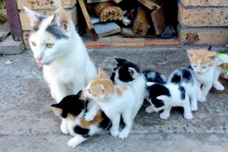 Бездомная кошка выкормила пятерых котят без еды фото