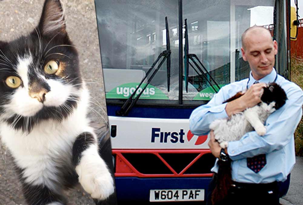 Автобусный кот, или счастливого пути! фото